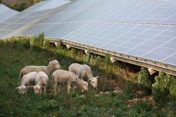 Concilier agriculture et parcs solaires au sol